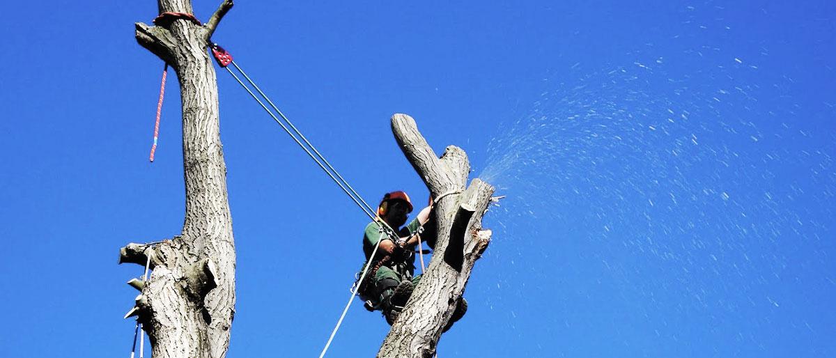 Permalink auf:SPEZIAL Baumfällung